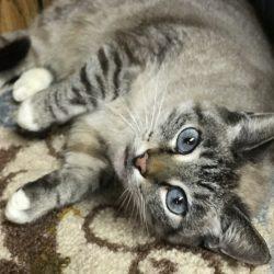 Missy- Adoption Pending